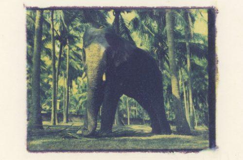 bruce paoli eléphant indien
