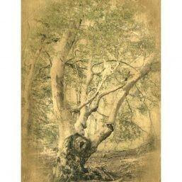 Hêtre, photographie sur bois, Natalène Boussac photographie alternative